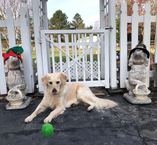 BLOG FROM THE DOG:  SUGAR HIGHLIGHTS THE TOP 6 HOLIDAY FOODS TO AVOID FEEDING YOUR PETS